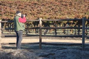 Vineyards of SLO Co.